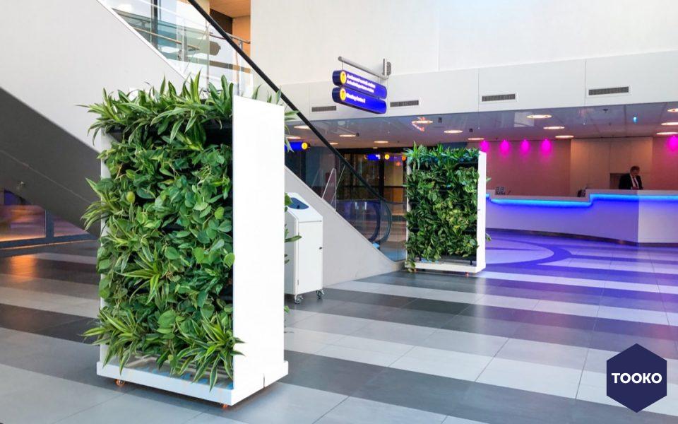 Hoogendoorn Projectbeplanting - ROOM DIVIDERS MET PLANTEN BIJ PASSENGER TERMINAL AMSTERDAM