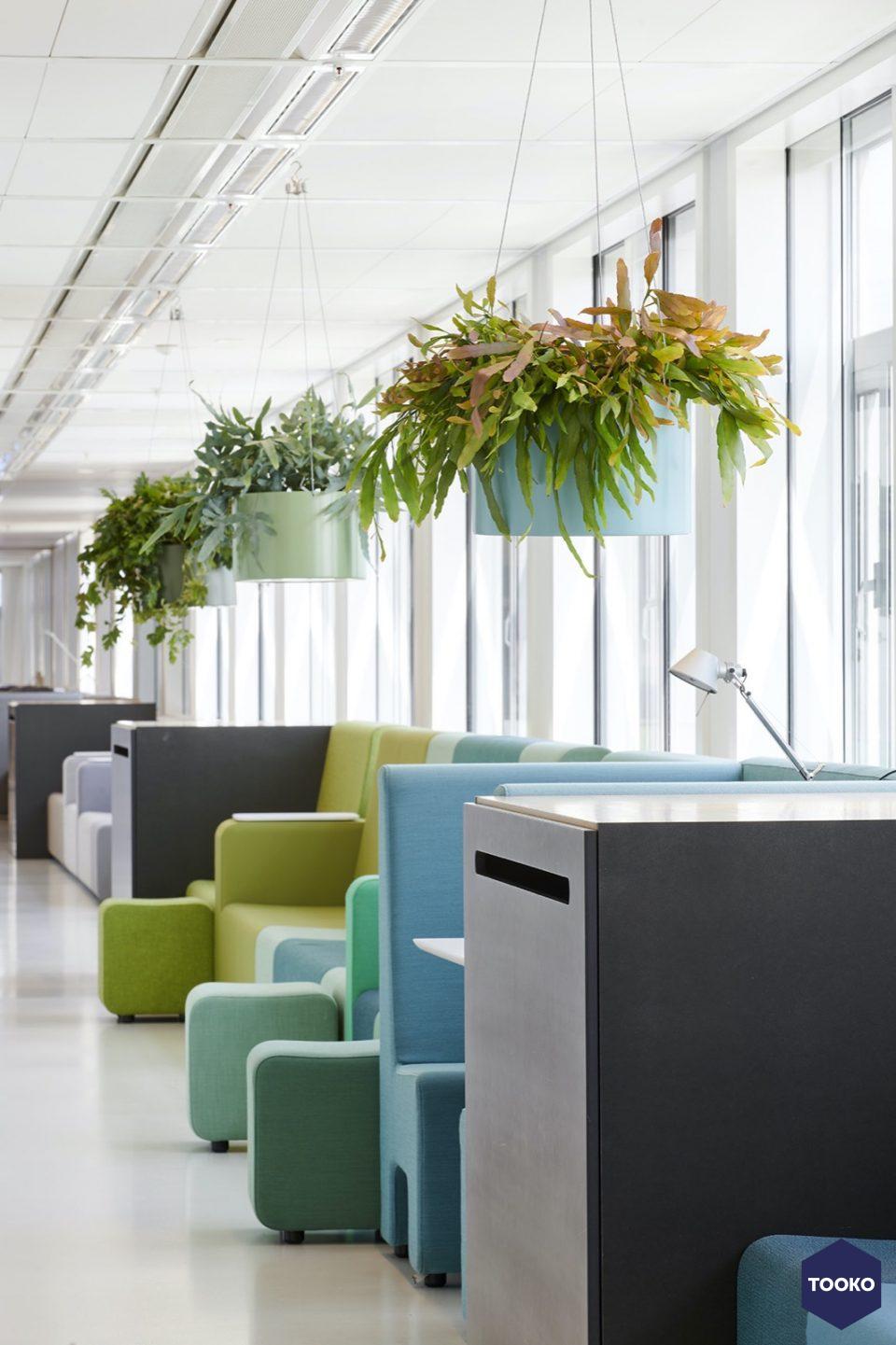 Interieurbeplanting De Klerk - Productielijn Plantinum Colourful